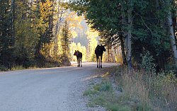 Click image for larger version.  Name:Moose.jpg Views:98 Size:278.1 KB ID:28386